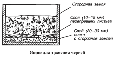 Навозный червь выращивание и разведение дома. разведение червей в домашних условиях для рыбалки