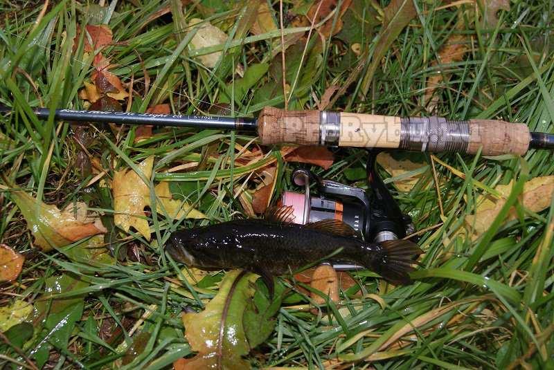 Ротан рыба фото и описание