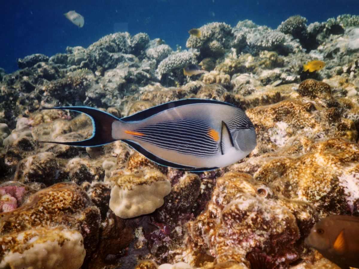Рыбы египта: каталог, ядовитые, самые опасные, хищные, видео » карта путешественника