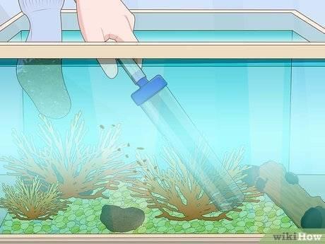 Как очистить аквариум в домашних условиях