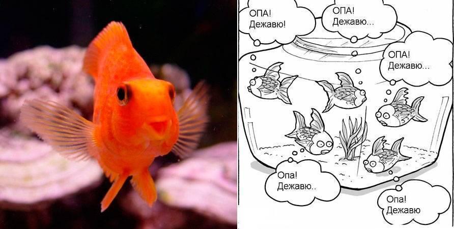 Есть ли память у рыб?
