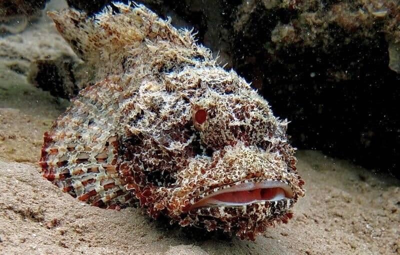 Съедобные рыбы красного моря