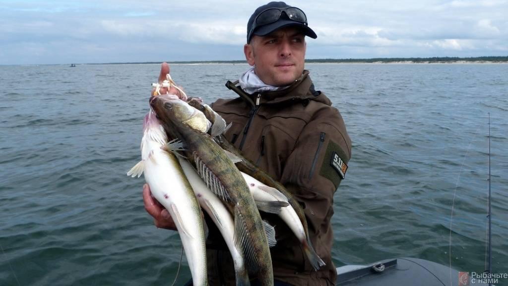 Рыбы чёрного моря: названия, описания, фото и особенности ловли, снасти и наживки
