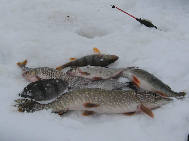 Рыбалка в костанайской области. форум и отчеты рыбаков