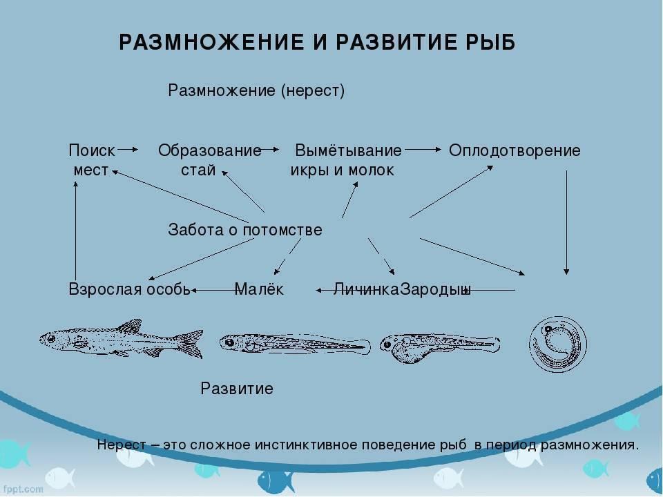 Влияние измененного гидрохимического режима водоема на жизнедеятельность рыб
