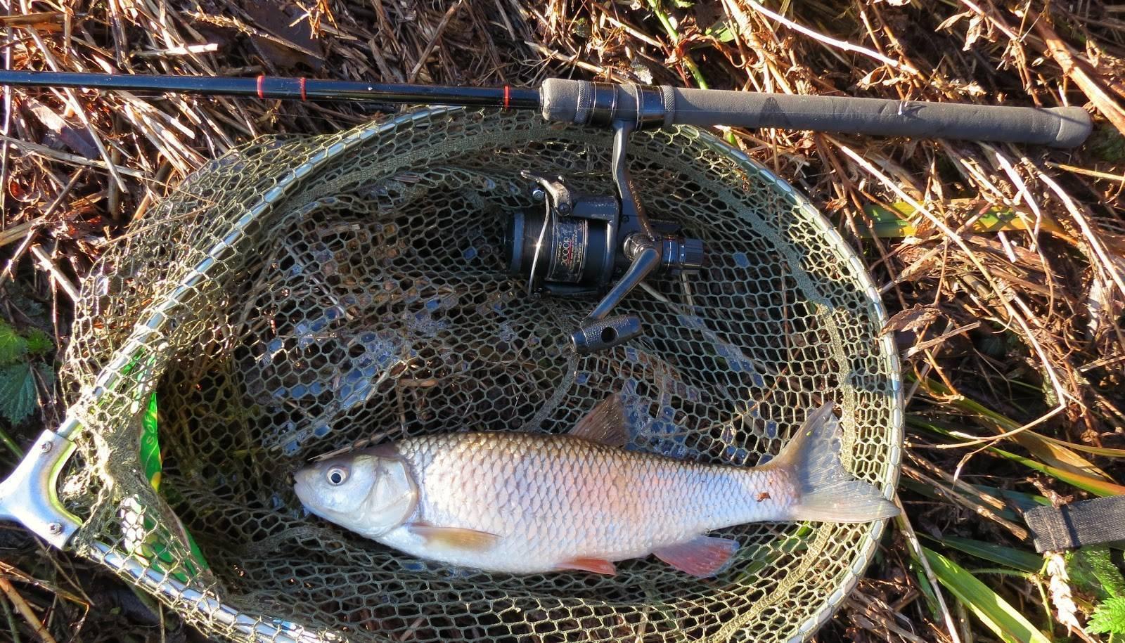 Ловля голавля на вертушку – рыбалке.нет
