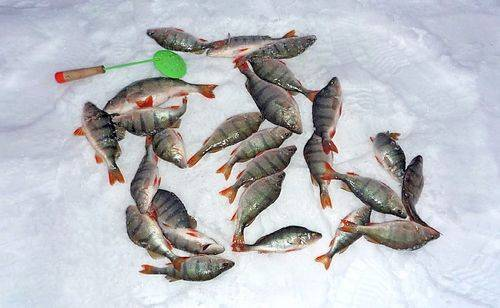 Рыбалка в омской области — обзор водоемов