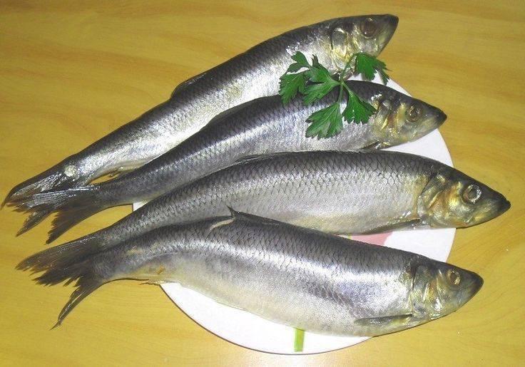 Донская селёдка жареная (don cossack fried herring) - вкусные заметки