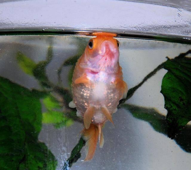 Почему рыбки в аквариуме лежат на дне и что делать
