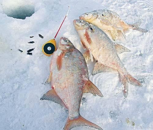Зимняя и летняя рыбалка на яузском водохранилище — лучшие места для ловли