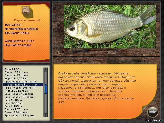 Рыба ёрш, описание и характеристики, места обитания, нерест