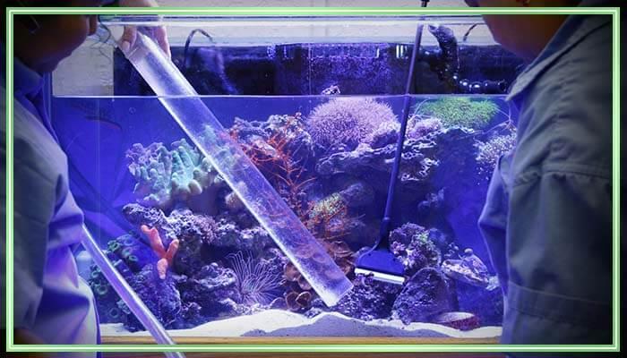 Скребок для аквариума своими руками скребок для аквариума своими руками