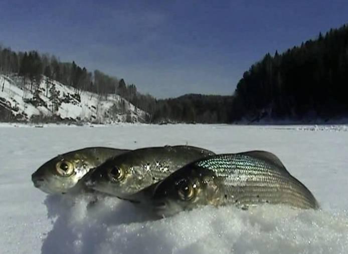 Рыбалка в кемерово и кемеровской области