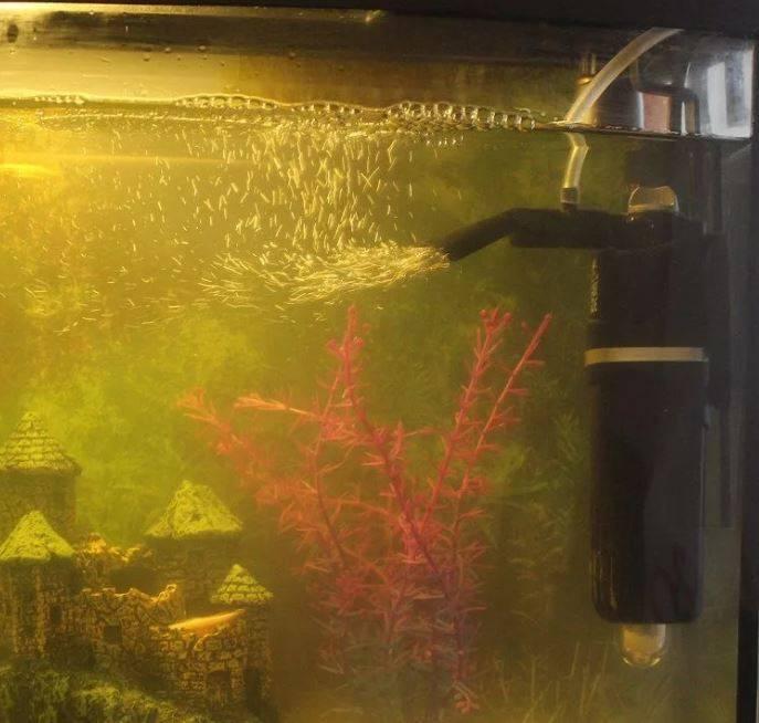 Как правильно установить внутренний фильтр в аквариуме