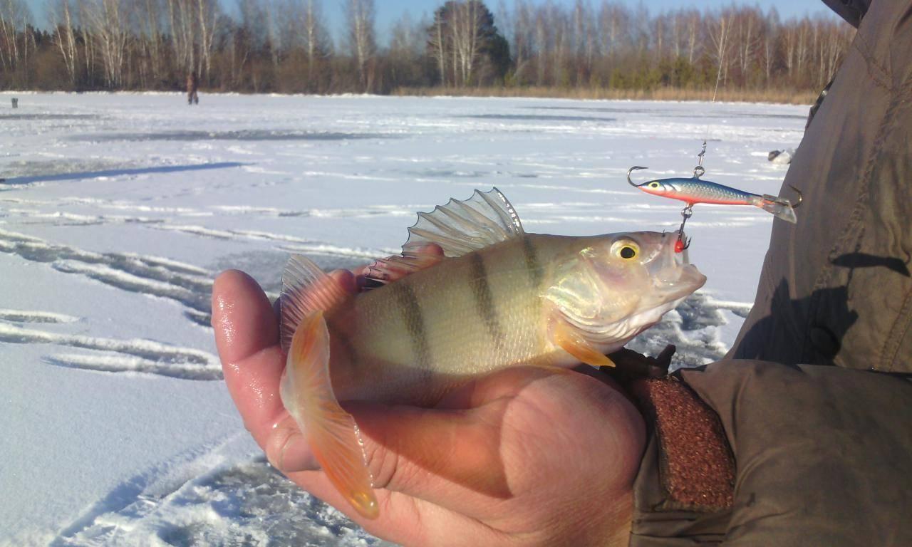 Ребриха - календарь рыболова. рыбалка в ребрихе, график клёва рыбы.