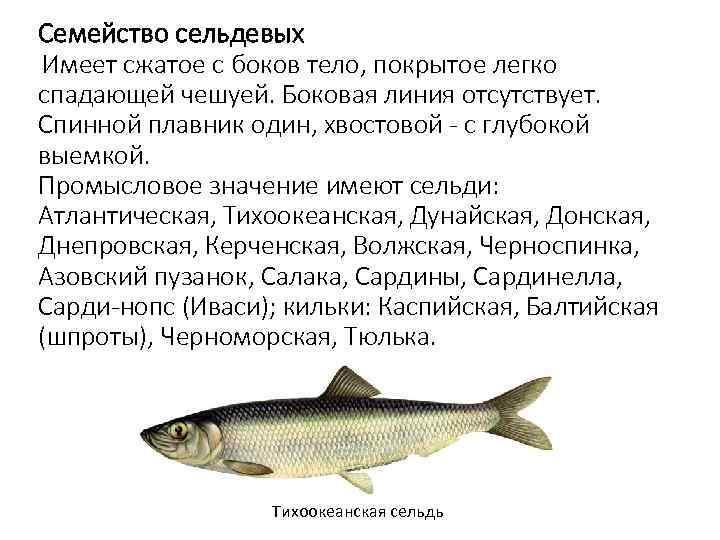 Рыба корюшка: польза и вред для организма, калорийность на 100 грамм, содержание бжу,