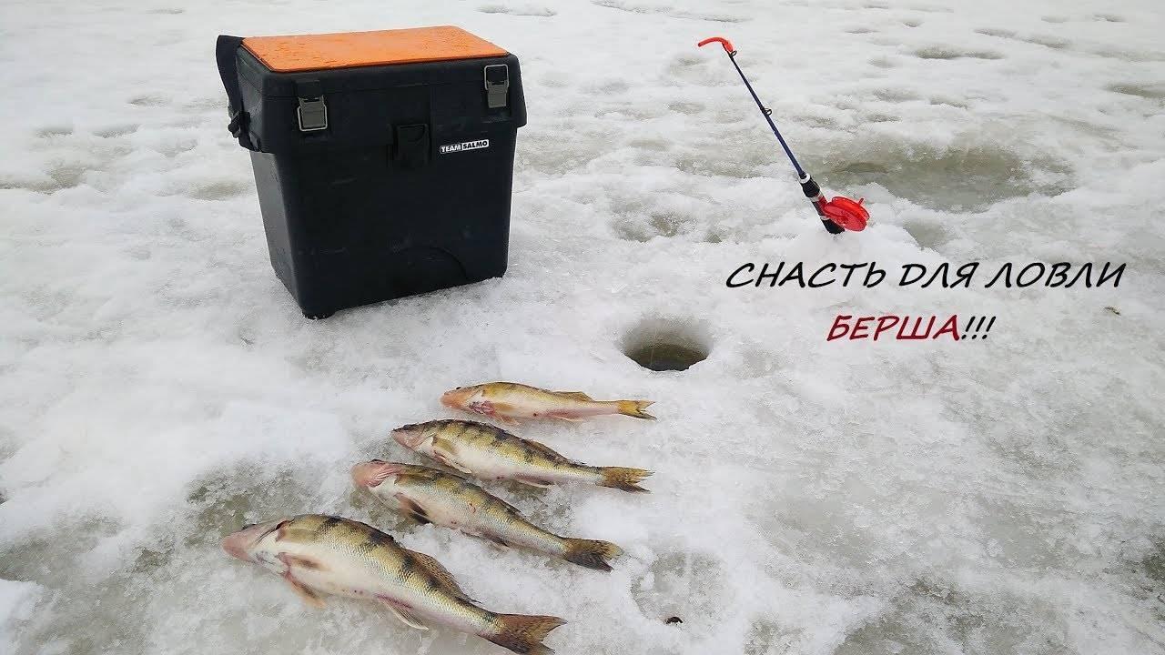 Ловля судака зимой на тюльку — тонкости рыбалки