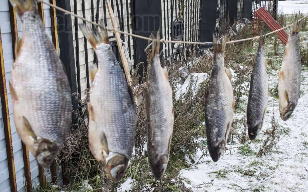 Рыбалка на язя