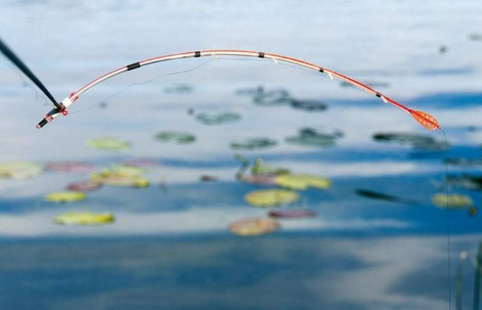 Ловля карася на удочку с боковым кивком: правила успешной рыбалки