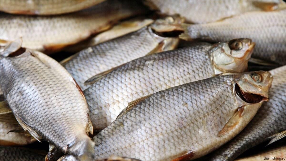 Рыба вобла: фото и описание | клёвая рыбалка