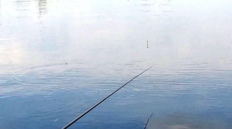 Ловля крупного карася: как поймать крупного карася среди мелкого