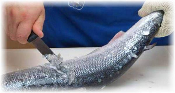 Как разделать форель, в том числе на филе или стейки и почистить от чешуи + видео