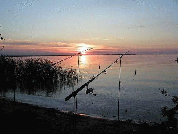 Места для рыбалки в ленинградской области – платная и бесплатная рыбалка!