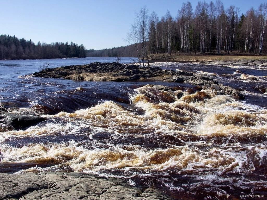 Шуя (река, впадает в логмозеро) — википедия. что такое шуя (река, впадает в логмозеро)