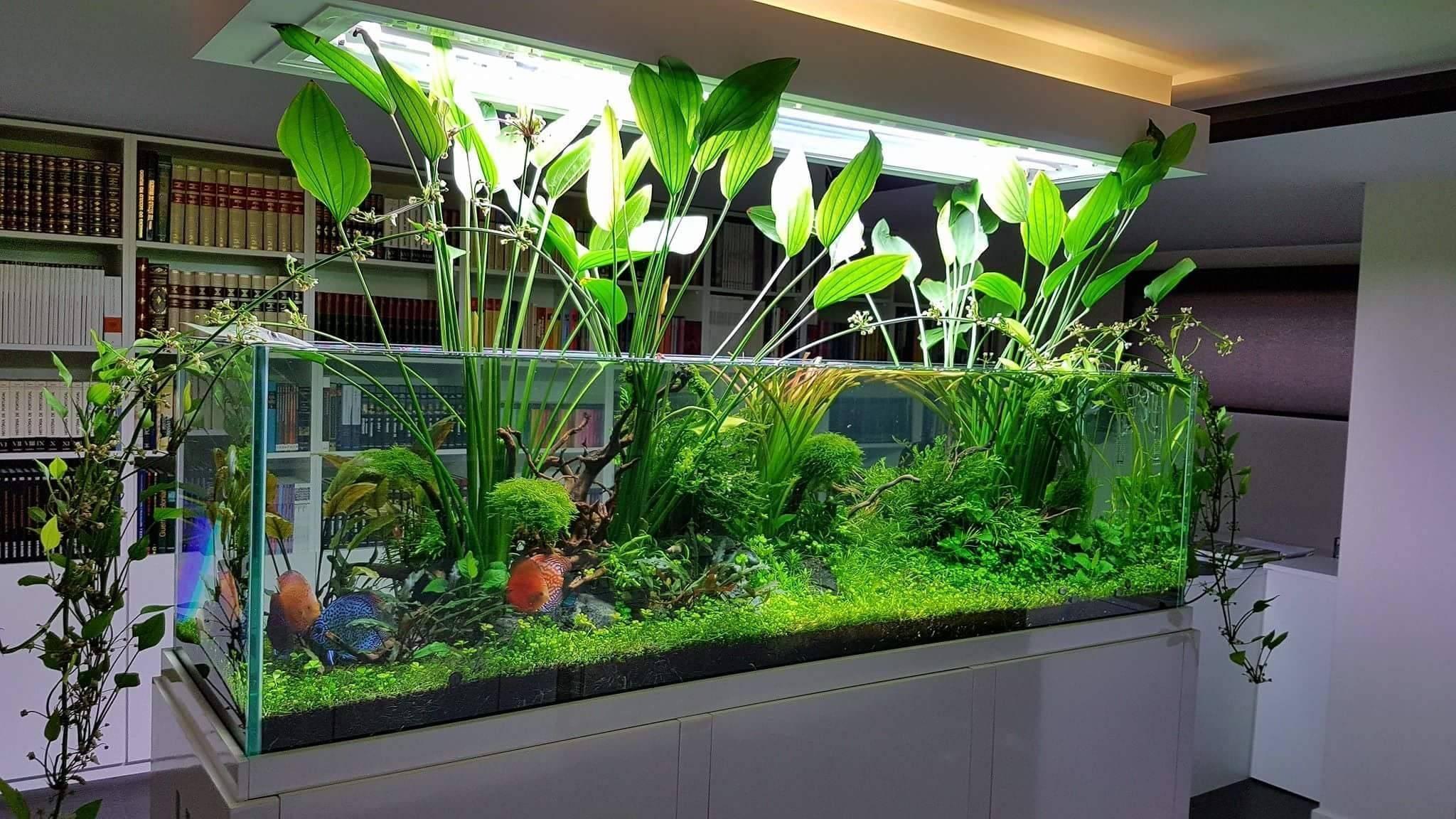 Фитофильтры для аквариума: назначение и разновидности, изготовление своими руками