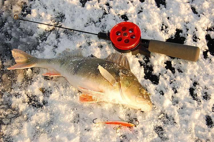 Ловля щуки: на балансир зимой, как ловить