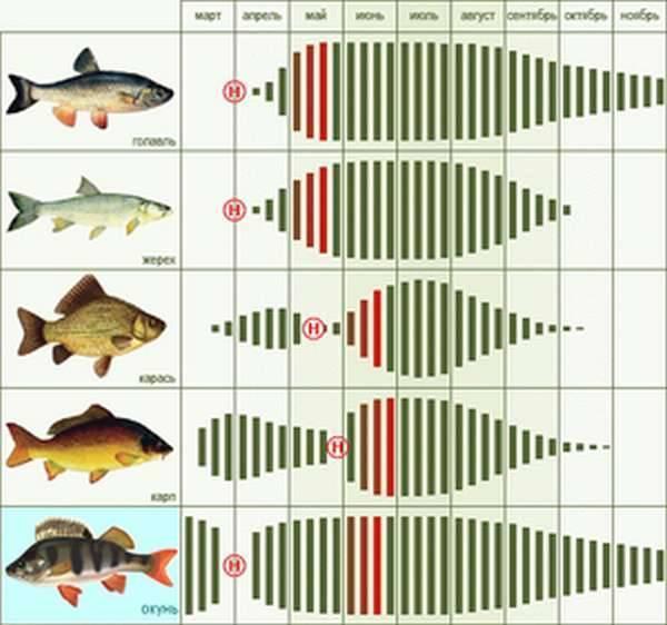 Образ жизни, повадки и способы ловли основных видов рыб