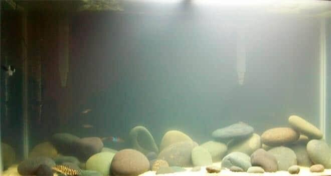 Что делать, если вода в аквариуме стала мутной: после замены, после запуска, как сделать кристально чистой в домашних условиях, какие средства помогут избавиться