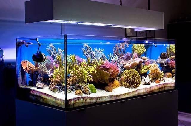Кондиционер для аквариума формамед, тетра, чистая вода и др.: как пользоваться, какова инструкция по применению и дозировка?