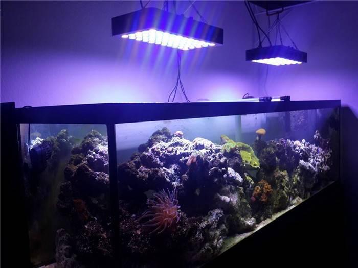 Освещение аквариума энергосберегающими лампами   1posvetu.ru