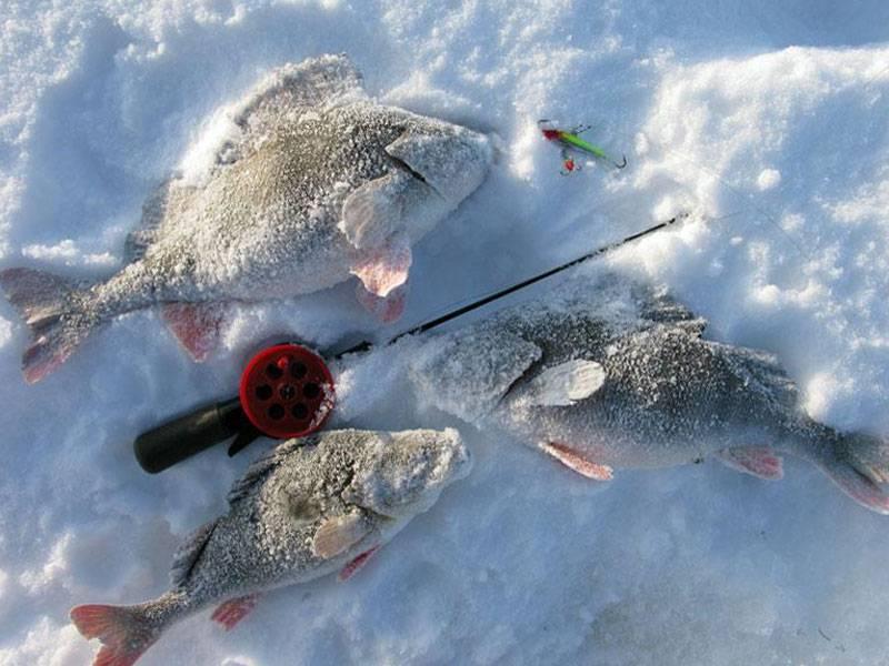 Ловля карася зимой со льда