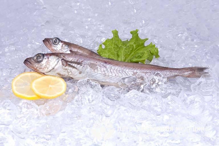 Рыба путассу: польза и вред для организма :: syl.ru