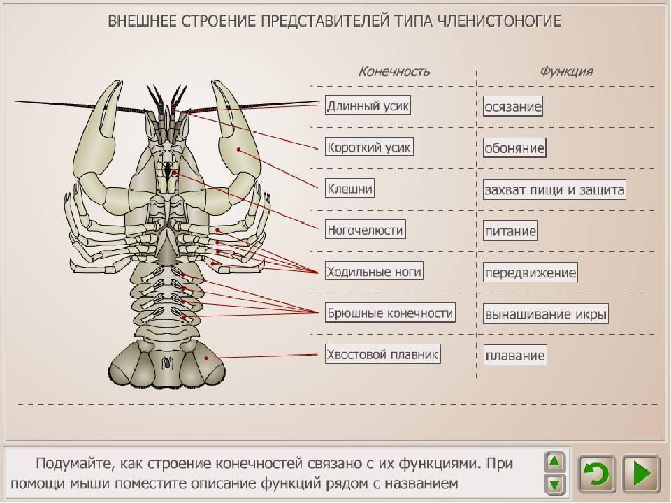 Личинка стрекозы – универсальная приманка на окуня – рыбалке.нет