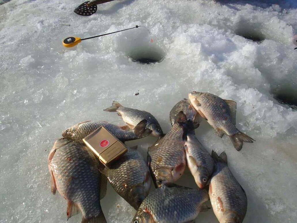 Как ловить щуку зимой— тактика поиска снасти и зимние приманки на щуку
