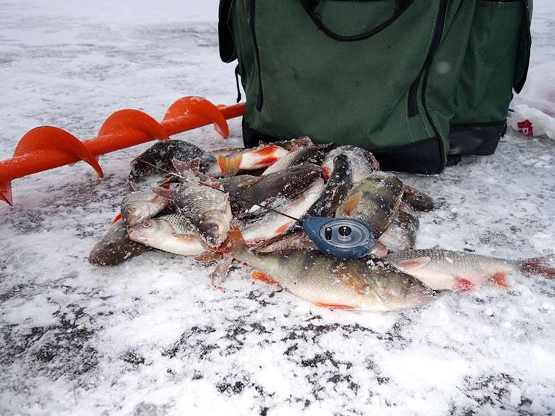 Ловля по первому льду – рыбалка онлайн ? prorybu.ru