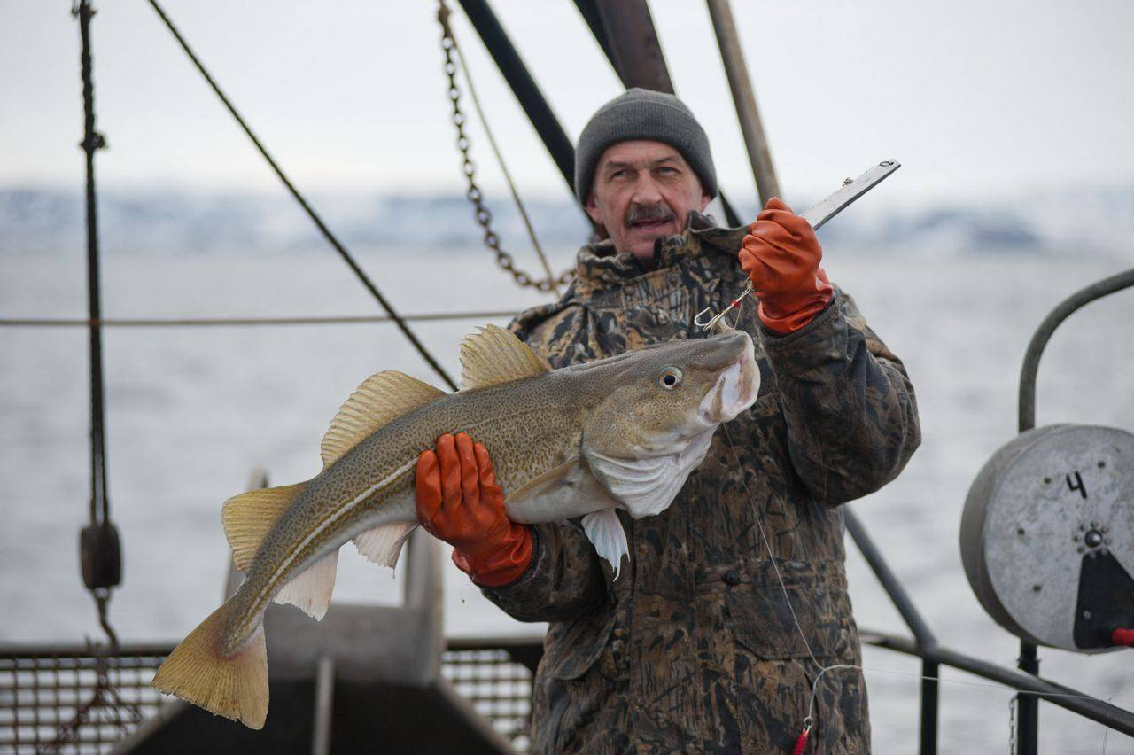 Рыбалка в мурманске и мурманской области: морская и на реке умба, териберка и кола, другие места, ловля горбуши и семги
