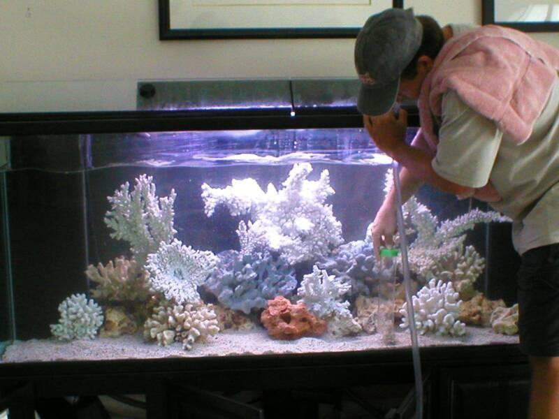 Что нужно знать о грунте в аквариуме?