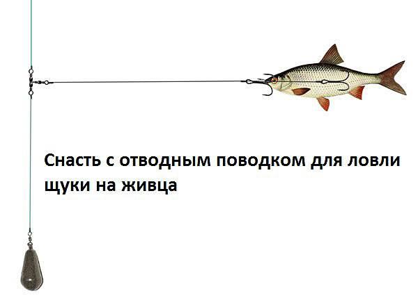 Где искать щуку в октябре - zaulov.by - ну, за рыбалку!