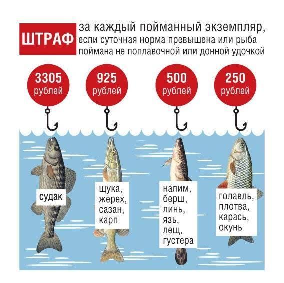 Минимальный размер выловленных рыб в таблицах