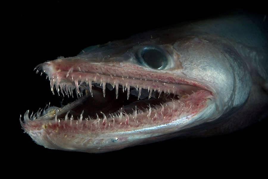 Морские чудовища: реальные монстры глубин морей и океанов