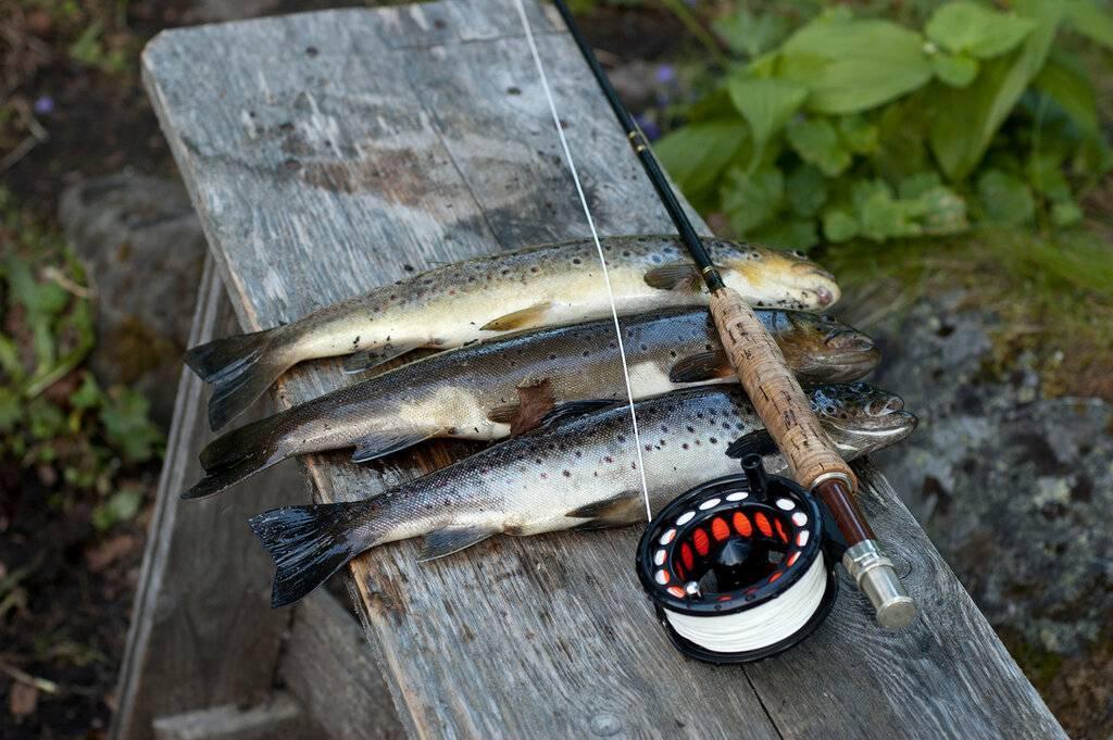 Рыбалка в мурманской области (51) | карта рыболовных мест