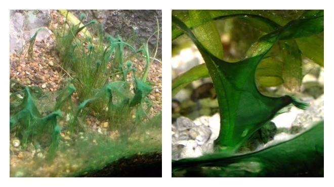 Почему не растут или плохо растут растения в аквариуме?