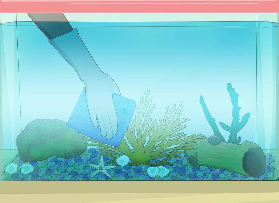 Как и чем чистить аквариум в домашних условиях