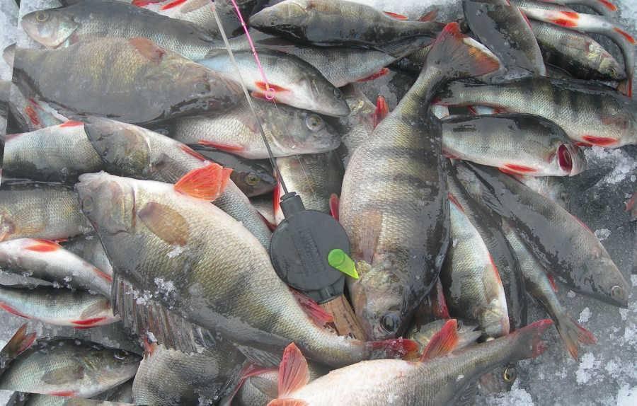 Рыбалка в калужской области 2018 - известные места