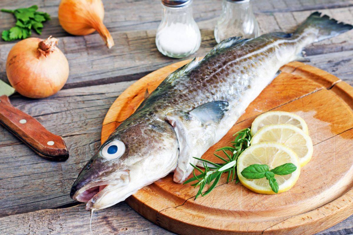 Рыба пикша: полезные свойства и вред   польза и вред