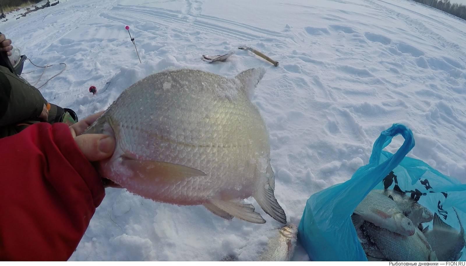 Рыбалка в горном алтае